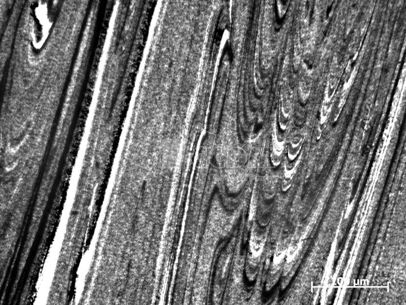 microscopia_otica_01